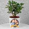 Ficus Compacta In Personalized Pot